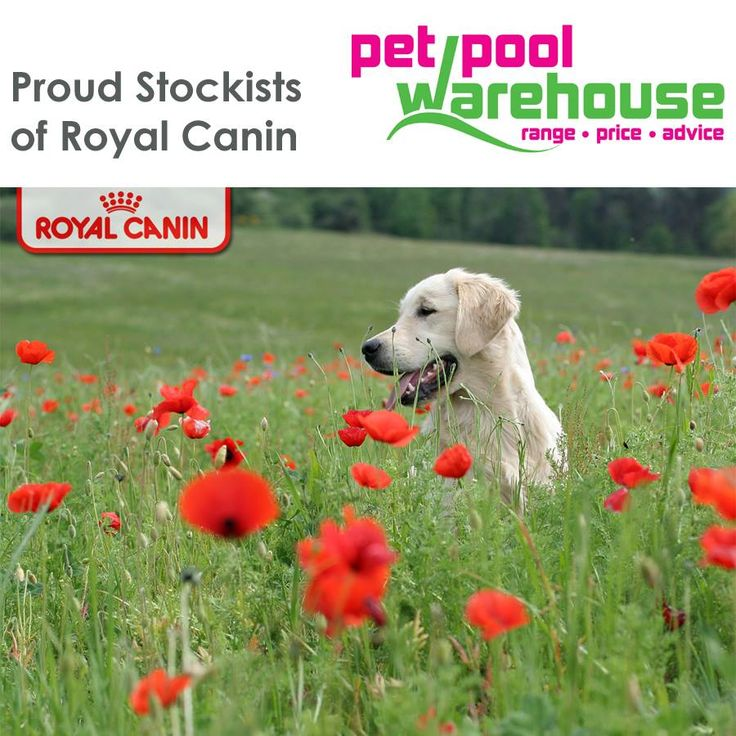 At Pet Pool Warehouse Knysna we stock Royal Canin food. Royal Canin believes that manufacturing a balanced Health Nutrition for your pet is like building a complex jigsaw puzzle of more than 50 pieces, each piece containing a nutrient vital to the animal's health. Optimal balance is obtained from all the ingredients formulated in adequate proportions and complementing each other to contribute to a small or larger piece of the jigsaw puzzle. #pets #petnutrition