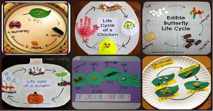 Manualidades sencillas y divertidas para explicar ciclos vitales en animales y plantas Nacer, crecer, reproducirse y morir son las cuatro etapas del ciclo de vida de todos los animales. Aunque es común en todos...