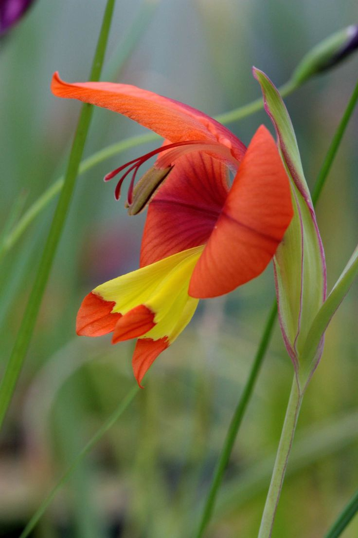 98 best plant and flower images on Pinterest | Propagating ...