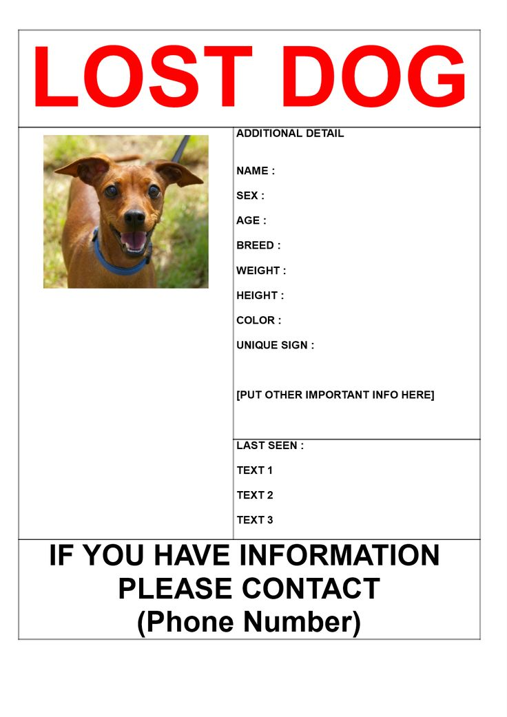 Find missing dog poster template - Download this Find missing dog poster template if you are looking for a dog and need help from other people around you in your search for this missing dog.