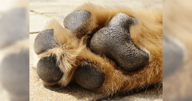 Do Your Dog's Feet Oddly Smell Like Fritos? You're Not ...