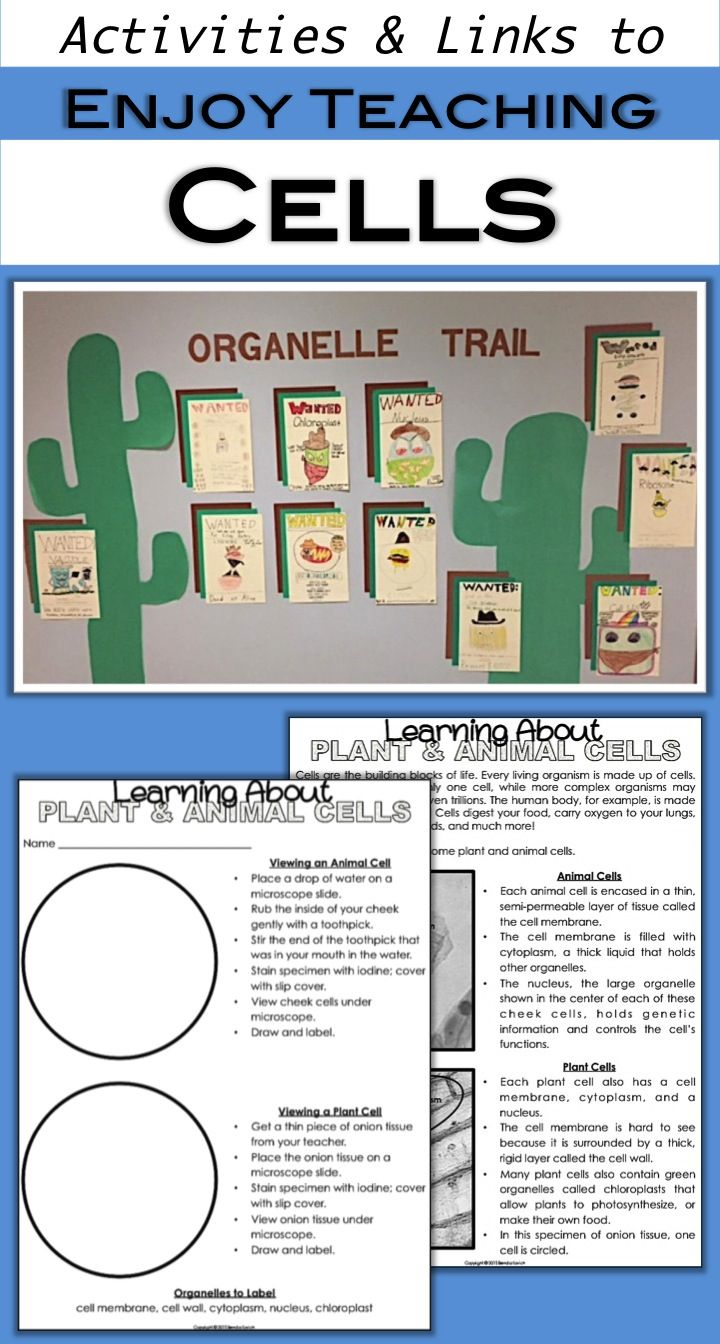 Have fun introducing cells! Your fourth grade and fifth grade students will love looking under the microscope, watching cool videos, and exploring cell parts with the organelle trail project. Visit enjoy-teaching.com for ideas, activities, links, and freebies.