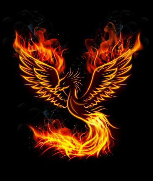 Collection of vector image of phoenix bird fire revival flight 25 eps random lyks rising - Fenix bird hd images ...