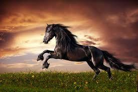 Resultado de imagem para imagem  cavalos
