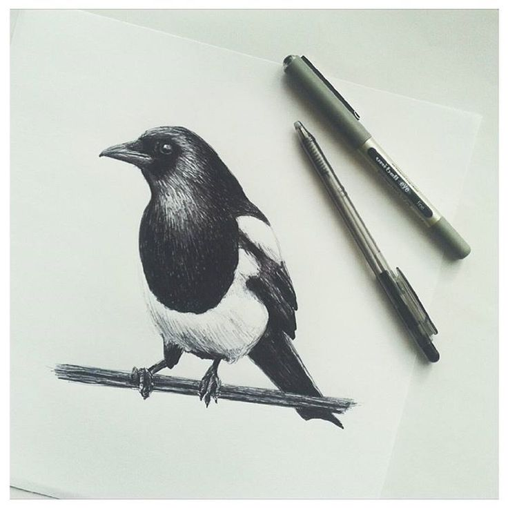 Spent a little more time refining today's #inktober drawing. Really loving using the black biro to add more tonal shading. Magpie's aren't my favourite bird but they quite beautiful.  #inktober2016 #drawing #blackpen #biro #illustration #magpie #blackandwhite #artwork #birds #nature #artist #ink