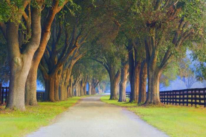 Another concept of the Cotswold drive: Tree lined drive at a horse farm in Ocala