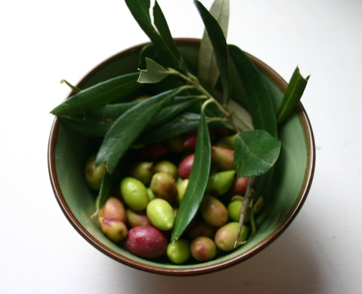 Olives from our friends' olive grove.