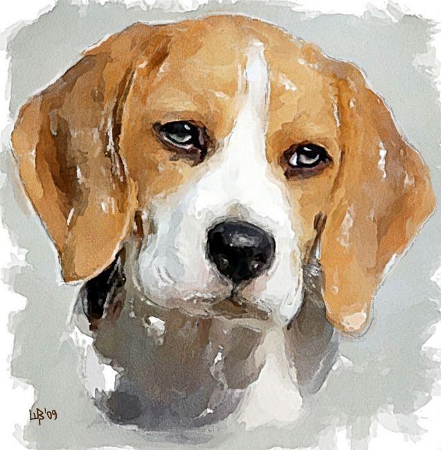 The beagle   Vitaly Shchukin
