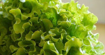 Projeto Verdejar ¨Ser verde,tornar-se verde: Cultivo do Alface.