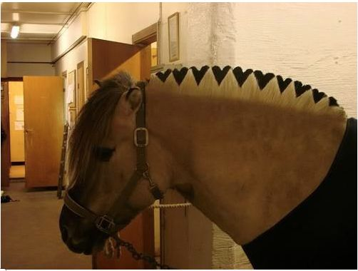 I really want a Norwegian Fjord now so I could do this to their mane.