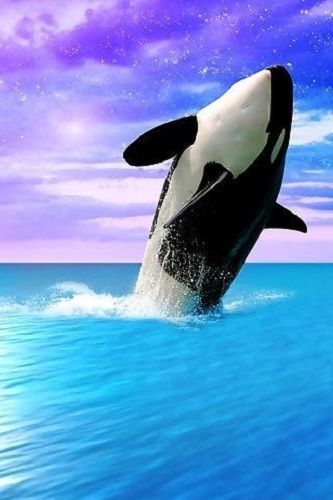 Group Of Orca Wallpaper For Walls Home