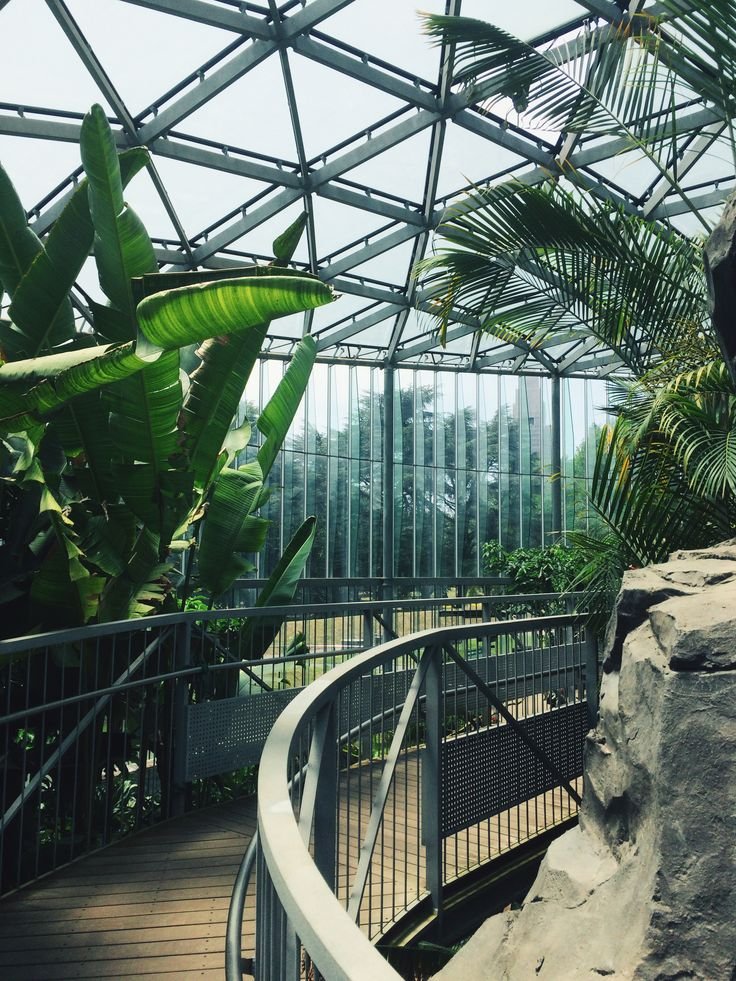 Inside the greenhouse in Shinjuku Gyoen Park