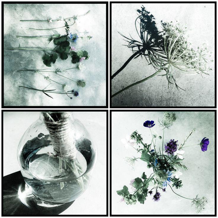'own-garden-flowers'   studiobern.blogspot.nl