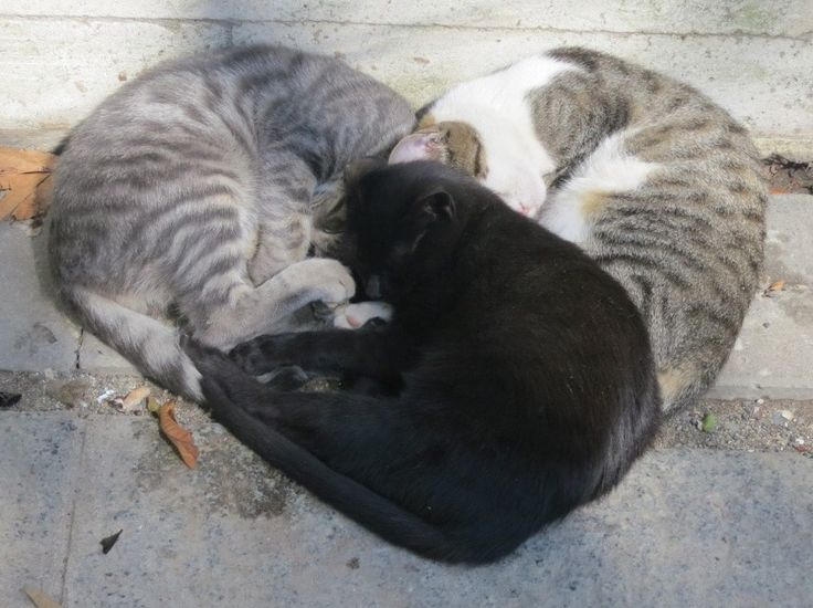 Three cats sleeping in heart configuration - more at superhuggable.com