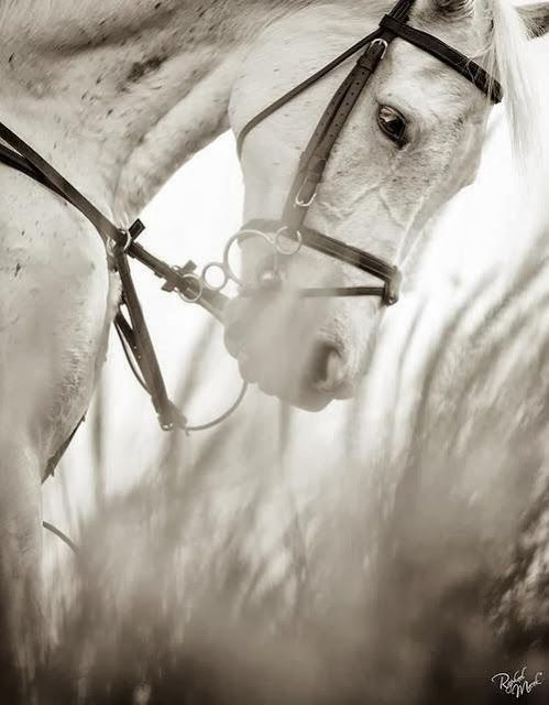 Habitually Chic®: Outlined, such grace & beauty, I feel this about Every horse.  just love this picture