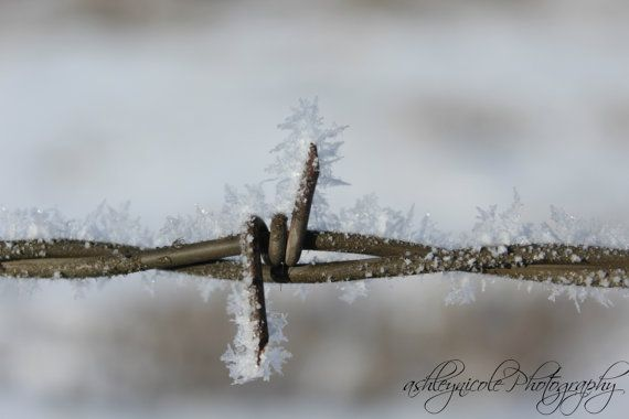 Barbed Wire Country Winter Western Photo by AshleyNicolePhotoArt