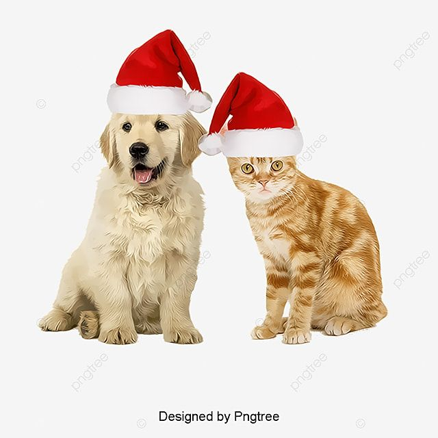 Dogs And Cats Red Dogs Product Kind Pet Png Transparent Clipart Image And Psd File For Free Download Cat Pet Supplies Dog Background Cats