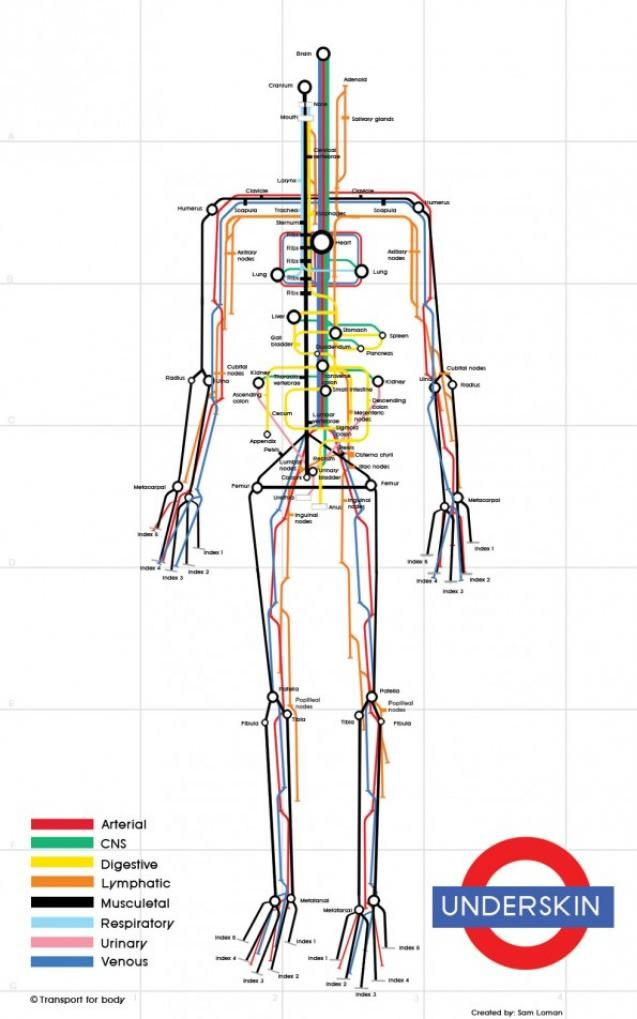 """The human body as a style of subway map (subway maps are becoming an increasingly popular metaphor for network visualization infographics). Sam Loman's """"Underskin"""" Visualization source: http://www.just-sam.com/just-sam/index.html"""