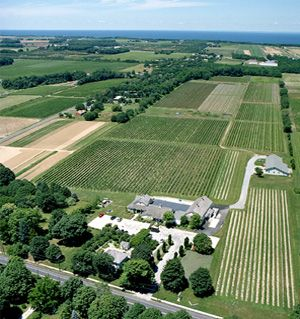 Long Island Wine Country | Wineries, Events, Shopping, Accommodations, Dining, Attractions