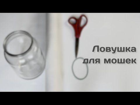 Самый простой способ избавиться от мошек дома | Лайфхакер - YouTube