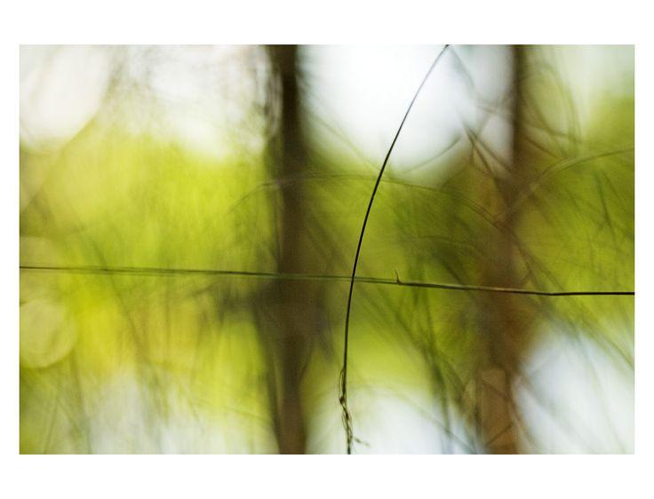 zelená+Abstraktní+obrázek+z+mých+vycházek.+Papír+Epson+archival+matte,+rozměr+A3,+bílé+okraje,+velikost+samotné+fotografie+je+30+x+20+cm.