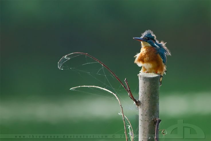 Bad Hair Day: Photos, Birds Birds Birds, Beautiful Birds, Roeselien Raimond, Bird Photography, Animal, Birds Ԑ̮̑ ̮̑ɜ