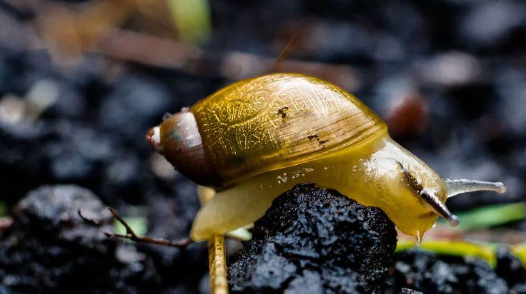 golden snail by mario enzmann on 500px