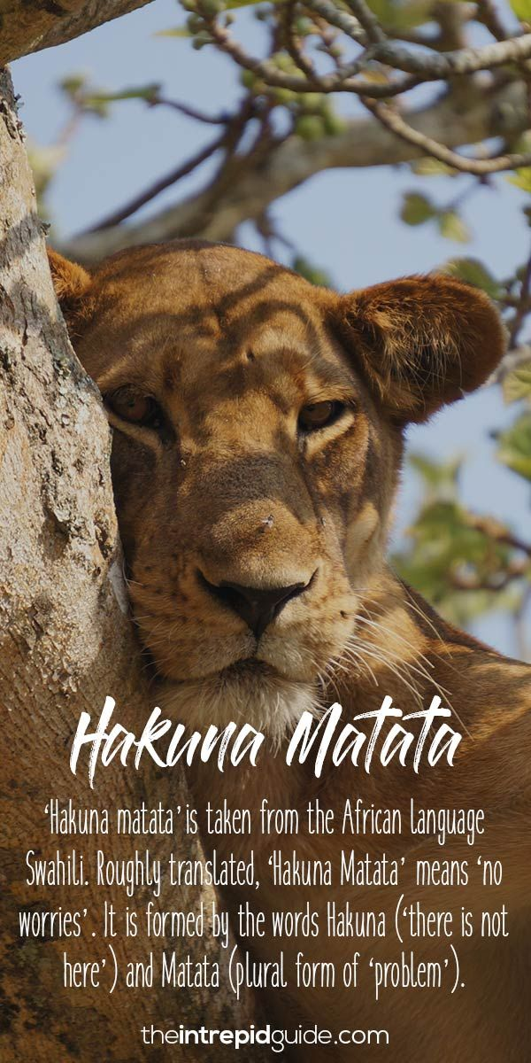 The Lion King African words Hakuna Matata