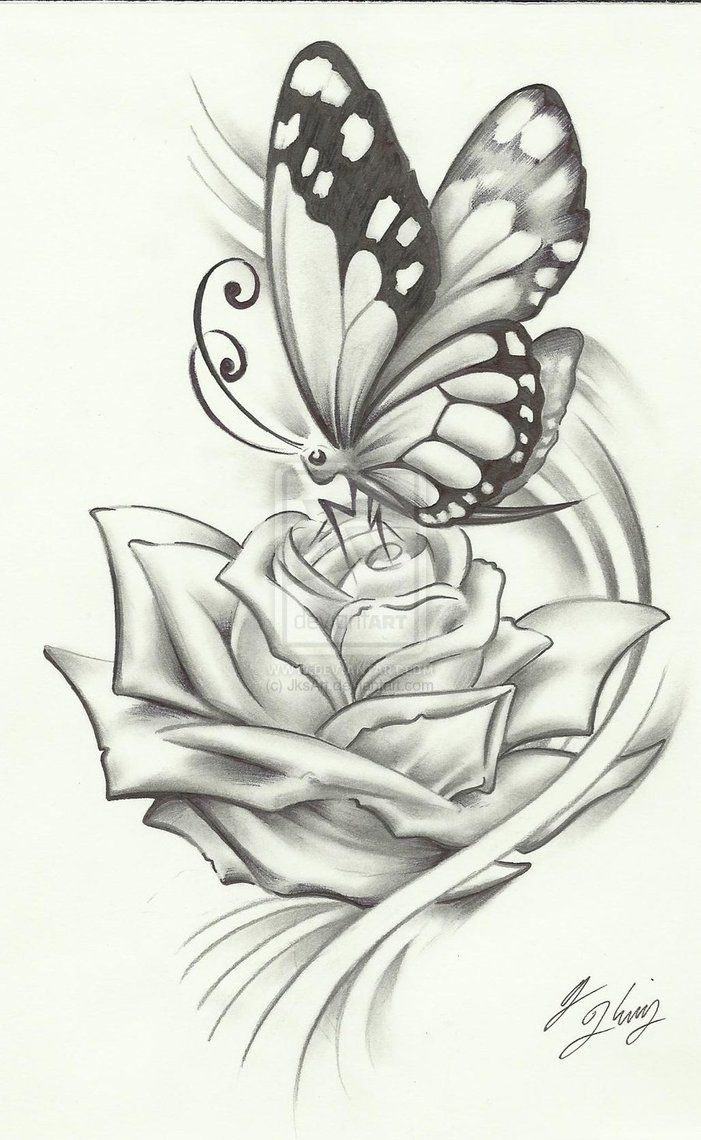 Butterfly and rose drawing - photo#8