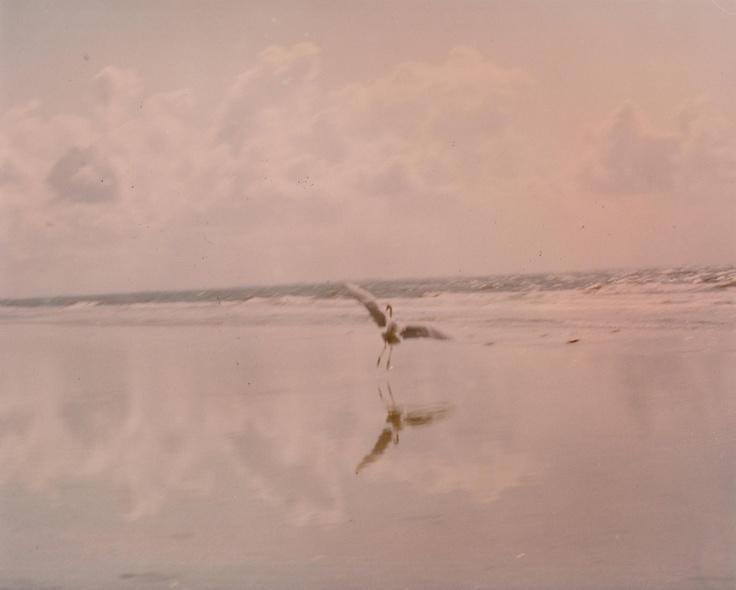 Sannibel Island, Florida