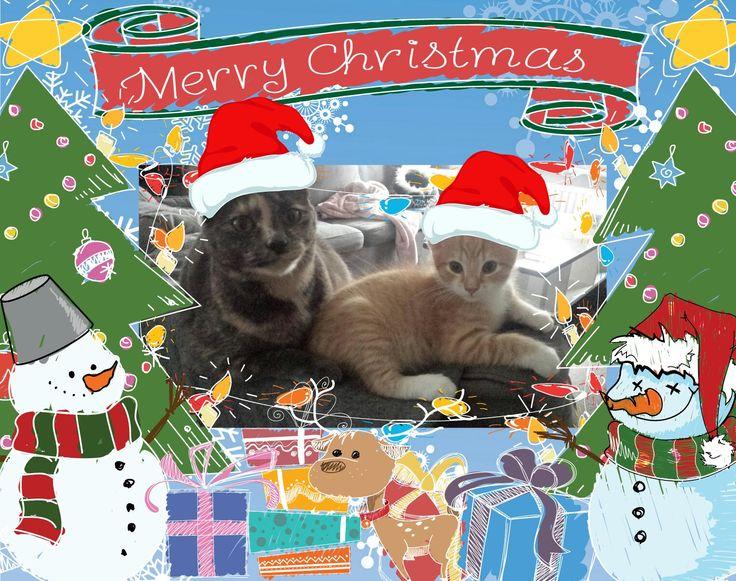 Merry Christmas 🎄 Christmas cats