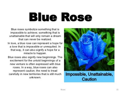 Blue rose meaning