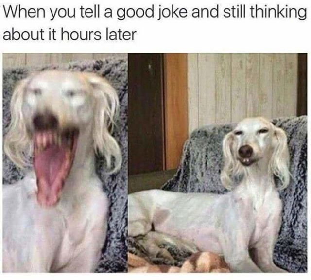 20 Funny Dog Memes – Funnyfoto | Funny Pictures - Videos - Gifs - Page 22 #funnydogs #DogMemes