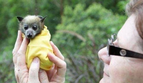Детеныши летучей мыши. Фото