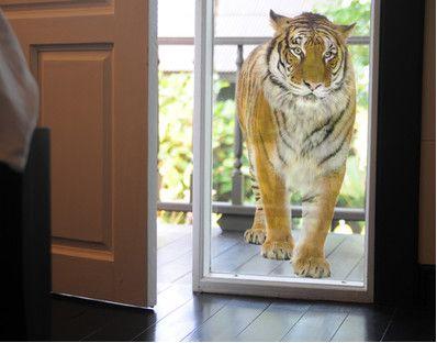 No.127 Bengalischer Tiger