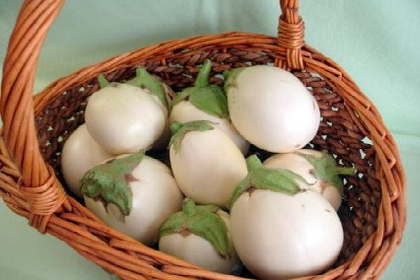Another amazing product from the Santorinian soil, the white eggplant!