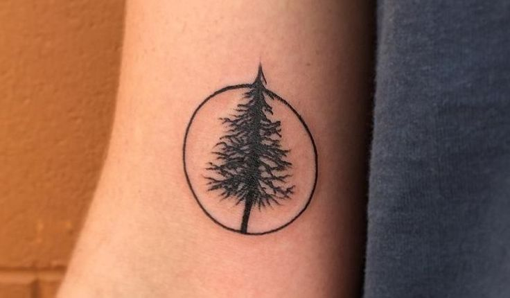 Pine trees are common across most of the northern for Ponderosa pine tattoo