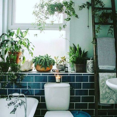 Is your flat in need of a bit of a summer sprucing? Might be time for a shower plant