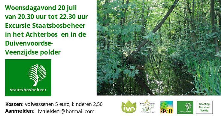 20 Jul - Zwoele zomeravond in het bos, wandeling voor de hele familie - http://www.oktip.nl/20-jul-zwoele-zomeravond-in-het-bos-wandeling-voor-de-hele-familie/