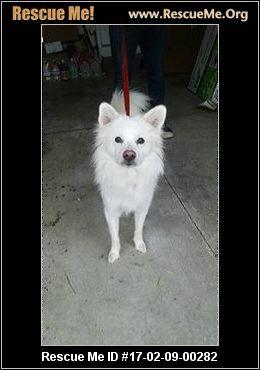 ― Ohio American Eskimo Dog Rescue ― ADOPTIONS ―RescueMe.Org