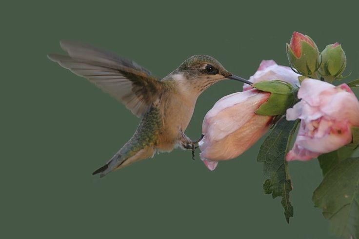 35 best hummingbird butterfly tropical landscape design - Butterfly and hummingbird garden designs ...