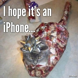 Kitty ^_^: Cat, Christmas Presents, Funny Stuff, So Funny, Funnystuff, Kitty, Wraps Paper, Merry Christmas, Christmas Gifts