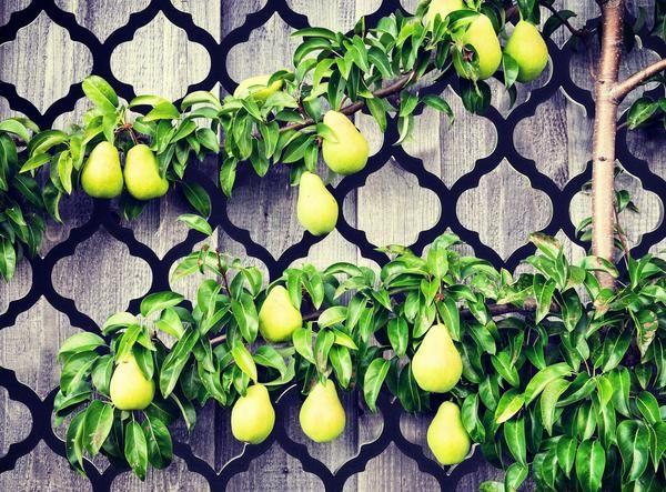 Garden trellis installed onto fence. Souk garden privacy screen and trellis by Screen With Envy