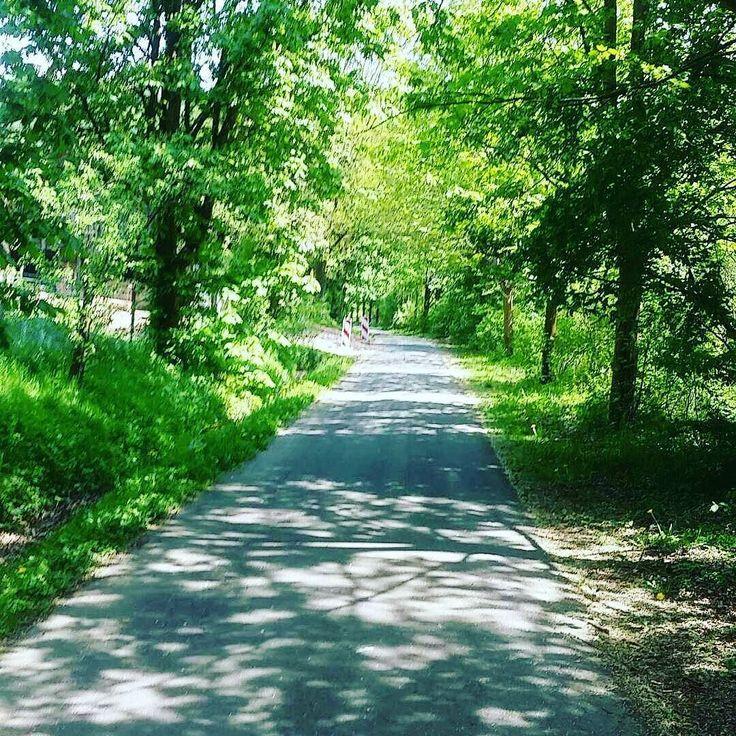 Meine persönliche Belohnung beim heutigen Laufen. #natur #sport #schatten #baum #weg #running #runningpic #snapchat #instasport #sonne #hot #zuwarm #schwitzen #fun #laufenistleben #runners #fit #healty #bergaufbergab #hkz #rotenburganderfulda #idylle #laufendurchrof by martin_moritz_offical