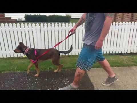 Optimistic Spoke Dog Obedience Training Site Here Dog Training
