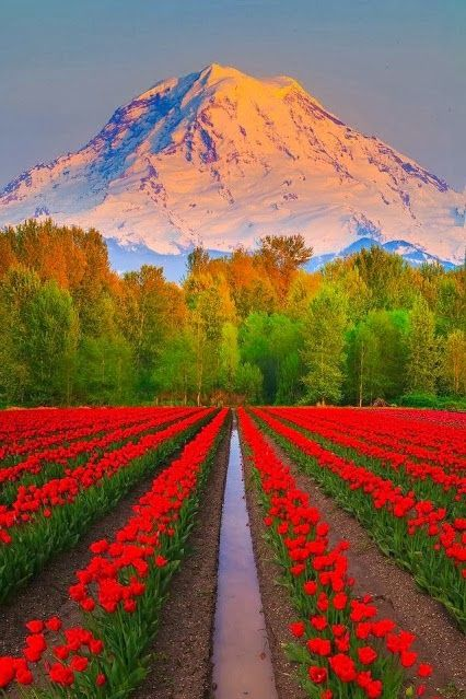 Mt+Rainier,+Puyallup,+Washington.jpg (426×639)