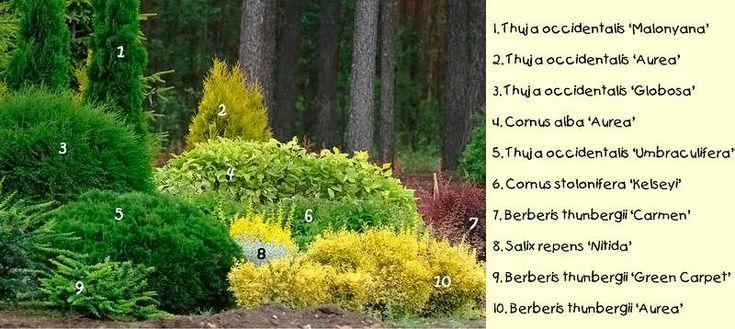 die besten 25 koniferen pflanzen ideen auf pinterest. Black Bedroom Furniture Sets. Home Design Ideas