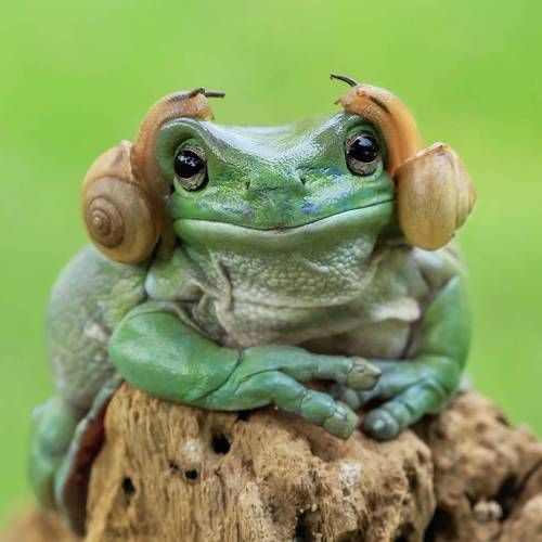 The Princess Leia of frogs XD