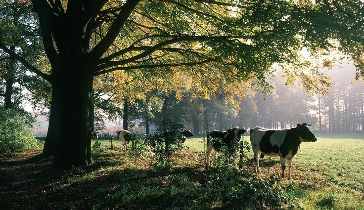 Doorwerth en Rosandepolder | fietsen, wandelen, paardrijden in Gelderland | Geldersch Landschap & Geldersche Kasteelen
