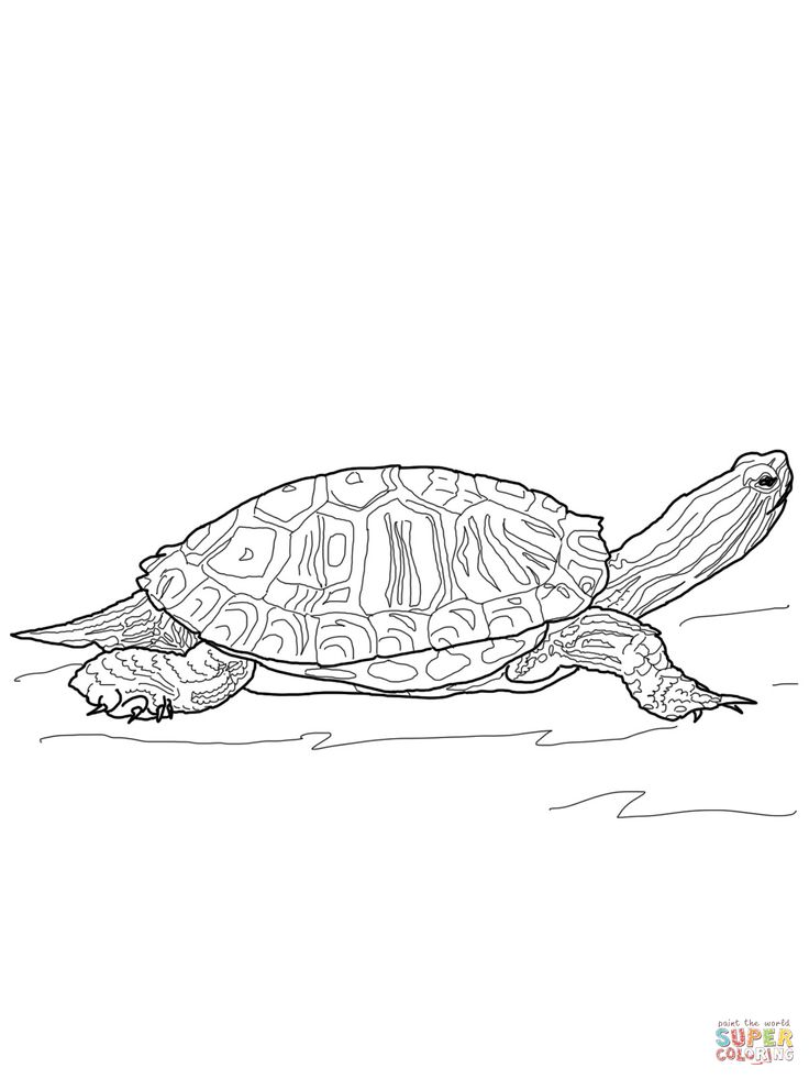 red eared slider turtle outline